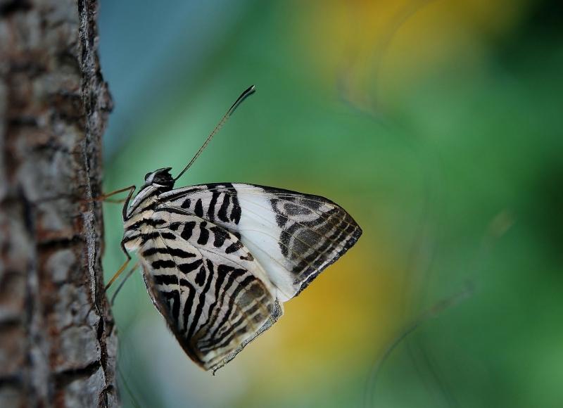 butterfly-43476_1920