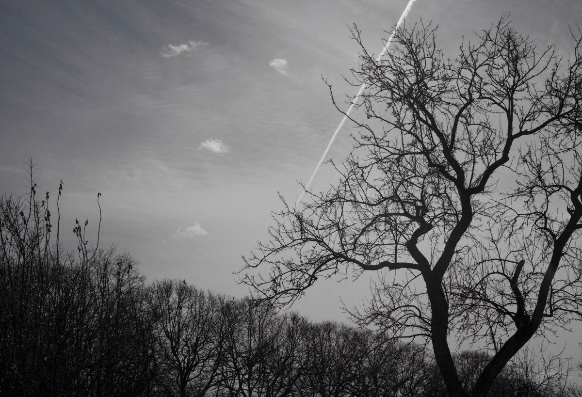 black-white-2263715_1920
