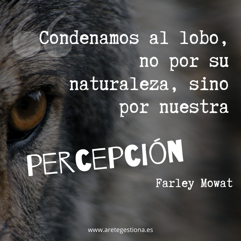 Condenamos_lobo_naturaleza_percepcion_Mowat