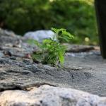 Aprender a aprender, competencia clave de las organizaciones resilientes